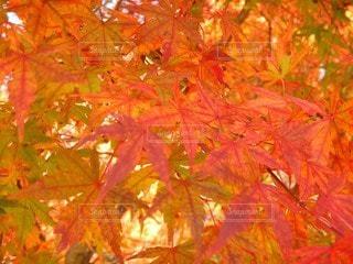 木のクローズアップの写真・画像素材[3384985]