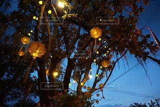 木のクローズアップの写真・画像素材[3453865]