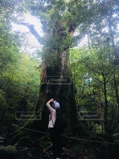 森の木の隣に立っている人の写真・画像素材[3578780]
