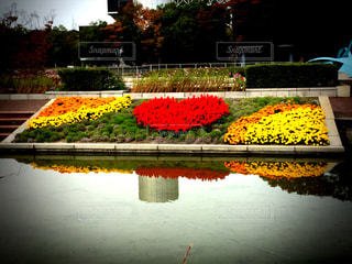 自然,公園,花,春,秋,湖,フラワー,池,お花,ハート,まゆ写