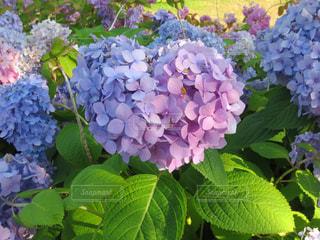 近くの花のアップ - No.775425