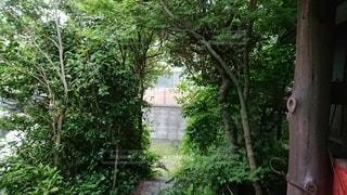 うっそうとした木々の写真・画像素材[3385133]