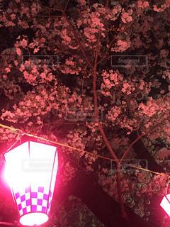 春 - No.403904