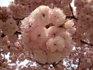 春 - No.412519