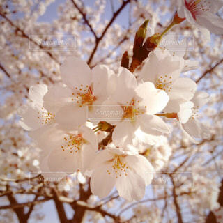 春 - No.412530