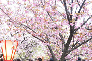 春 - No.412893