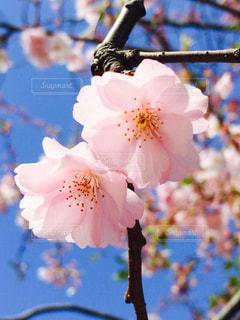 春 - No.417568