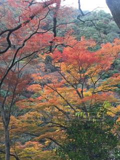 背景の山と木 - No.889609