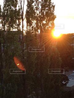 夕日とツリーの写真・画像素材[1277610]