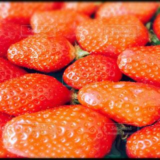 赤,いちご,フルーツ,フランス,ストロベリー,ゆか写