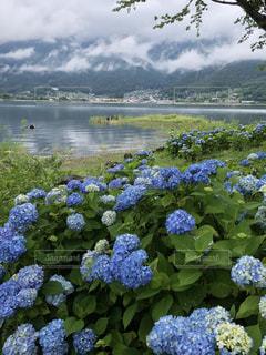 花園のクローズアップの写真・画像素材[3390141]
