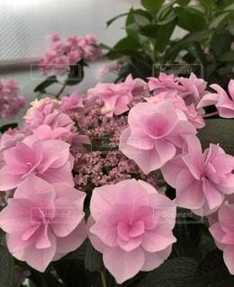 花のクローズアップの写真・画像素材[3390241]