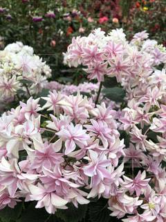 花のクローズアップの写真・画像素材[3390245]