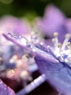 花のクローズアップの写真・画像素材[3391276]