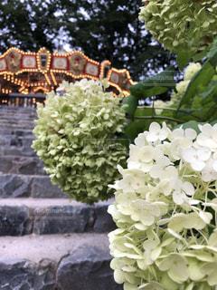 花散歩の写真・画像素材[3393802]