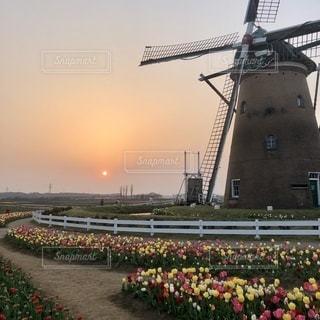 風車とチューリップと夕日の写真・画像素材[3394700]