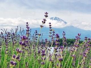 富士山の見える風景の写真・画像素材[3398188]
