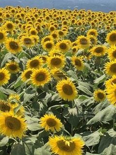 花のクローズアップの写真・画像素材[3398614]