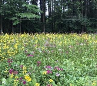 森の中の花畑の写真・画像素材[3398616]