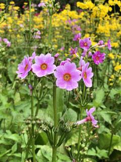 花のクローズアップの写真・画像素材[3398617]