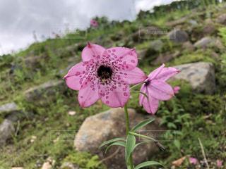 植物の上のピンクの花の写真・画像素材[3460421]