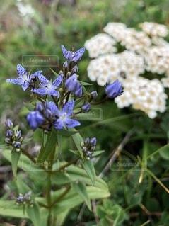 花のクローズアップの写真・画像素材[3469941]
