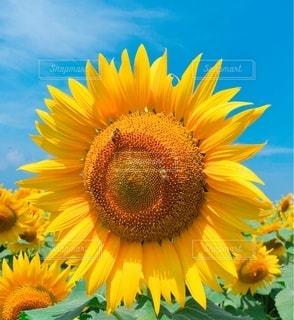 花のクローズアップの写真・画像素材[3503008]