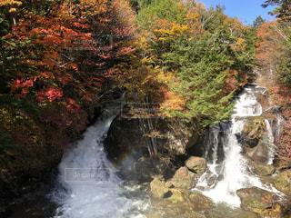 木々に囲まれた滝の写真・画像素材[3574800]