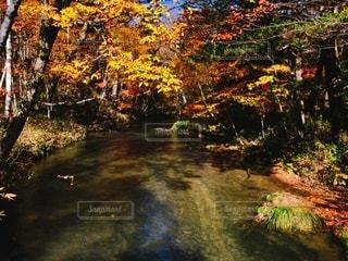 森を流れる川の写真・画像素材[3574843]