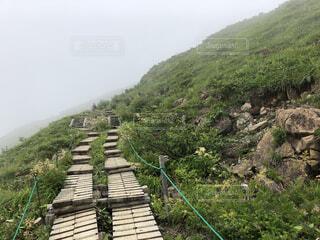 緑豊かな登山道の写真・画像素材[3647264]