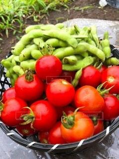 食べ物,風景,緑,赤,トマト,野菜,ミニトマト,土,食品,新鮮,枝豆,畑,収穫,食材,採れたて,フレッシュ,ベジタブル