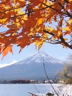 背景に山のある木の写真・画像素材[3724748]