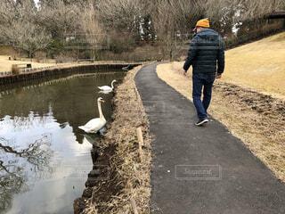 白鳥の池の写真・画像素材[4219843]