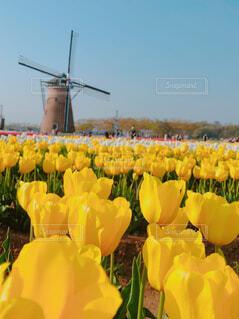 風車のある風景の写真・画像素材[4295707]