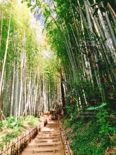 竹林の坂道の写真・画像素材[4408783]