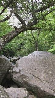 自然,夏,屋外,緑,水,川,水面,山,滝,樹木,苔,岩,涼しい,癒し,マイナスイオン,渓谷,冷たい,流れ,草木,北杜市