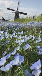 自然,風景,空,花,春,屋外,雲,風車,景色,樹木,風,ブルー,ネモフィラ,草木,日中,揺れる,回る,フローラ