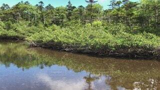 自然,風景,屋外,森,緑,青空,水面,水辺,池,日光,山,景色,トレッキング,登山,草,樹木,水鏡,草木,針葉樹,日中,北横岳,水辺の森