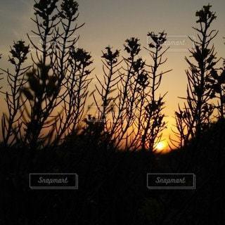 暗闇の中の木の写真・画像素材[3514579]