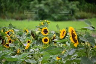 花のクローズアップの写真・画像素材[3391851]