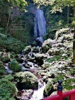 森の中の滝の写真・画像素材[3393651]