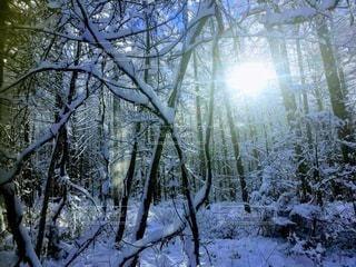 森の中の木の写真・画像素材[3396512]