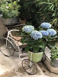 紫陽花の写真・画像素材[3393151]