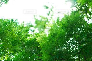 森の中の植物の写真・画像素材[3394992]