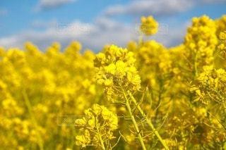 花のクローズアップの写真・画像素材[3453550]
