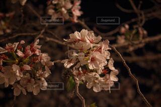 花のクローズアップの写真・画像素材[4313954]