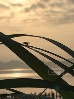 自然の写真・画像素材[3494742]