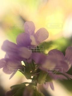花のクローズアップの写真・画像素材[3506175]