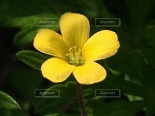 花のクローズアップの写真・画像素材[3509204]