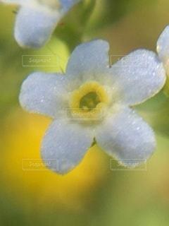 花のクローズアップの写真・画像素材[3509226]